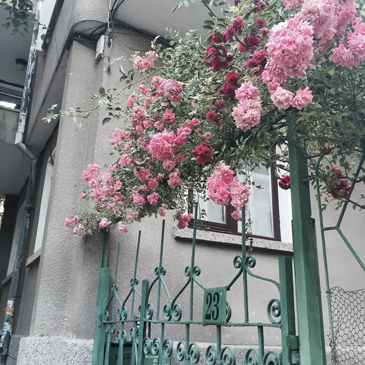 Kukkia rauta-aidan päällä Burgasissa